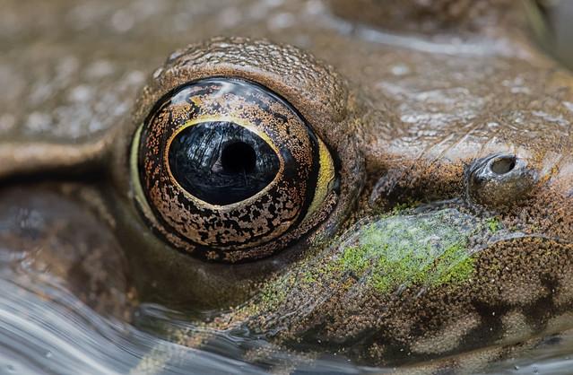Self Portrait in a Frog's Eye