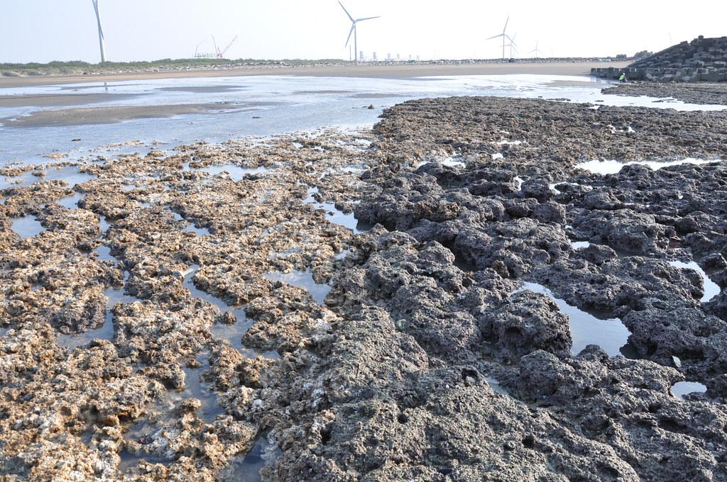 中油工作船於3月28日擱淺造成藻礁大面積遭破壞,右側深色為藻礁原始樣貌,後方為大潭電廠。孫文臨攝