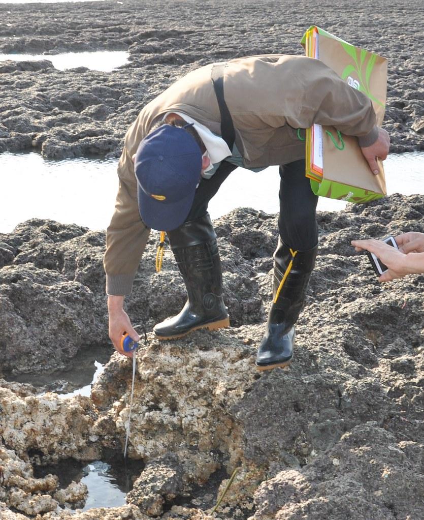 調查人員在場測量,遭剷除的藻礁深最達可50公分,要500年才能長回來。孫文臨攝