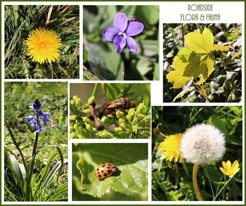 Roadside Flora & Fauna