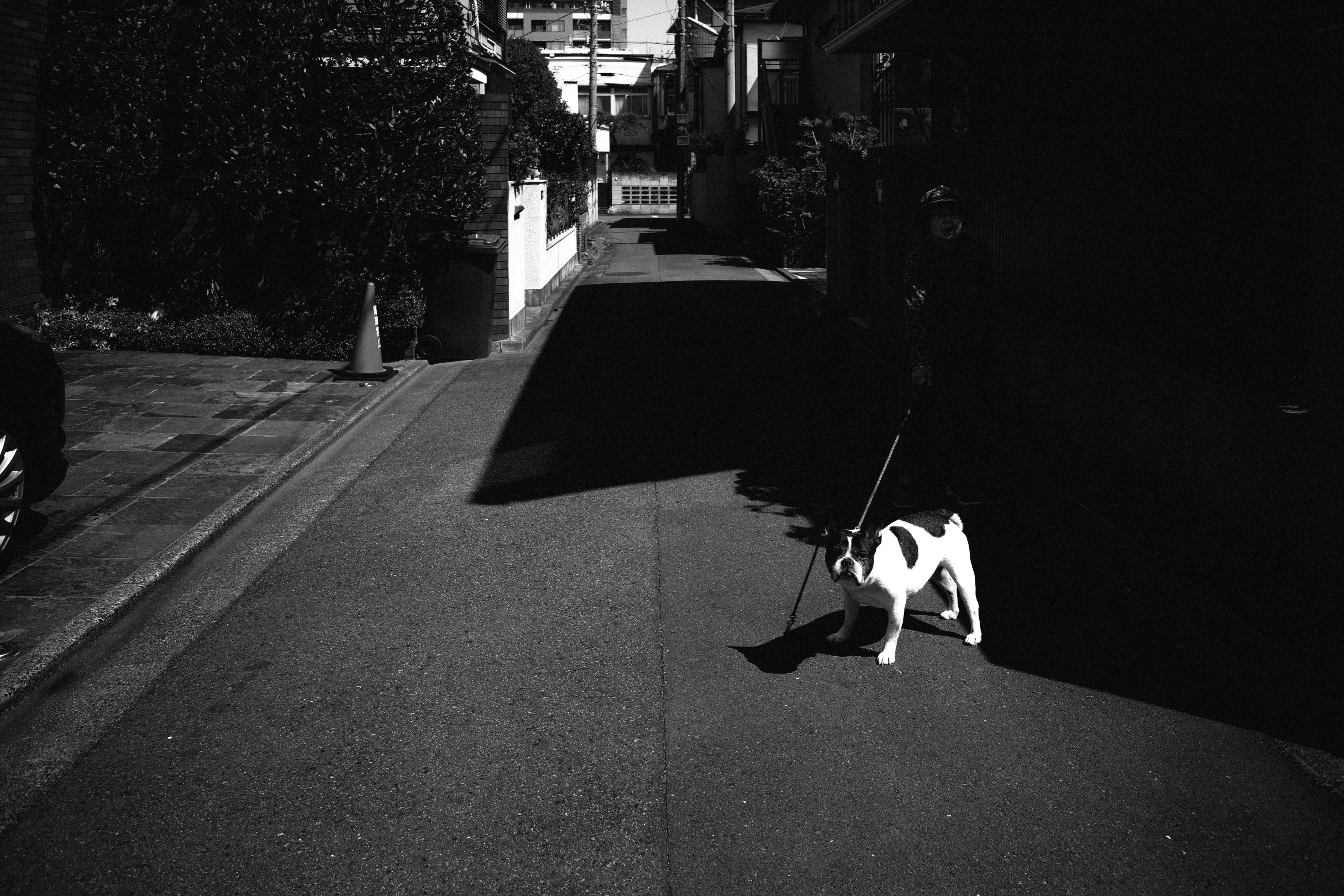 SIGMAfp Leica SUMMARON28mm