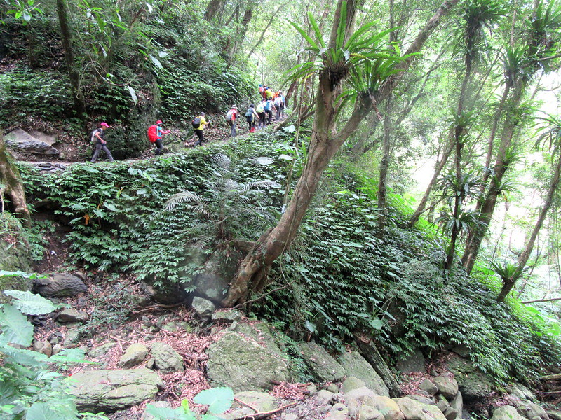 Hiking in the woods in Taiwan
