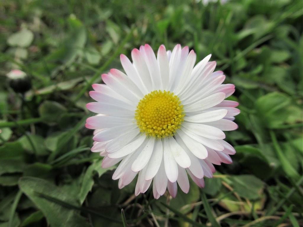 Lilleke rohus Flower courage  2020