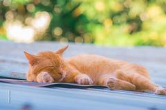 Sleep tight kitty Cat . .  #cats #cat #catlovers #catlover #instacat #meow #pets #kittens #kitten #kitty #catoftheday #catlife #world #cute #love #dogs #animals #pet #lovecats #cutecats