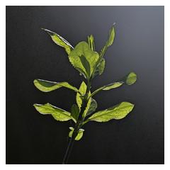 (Lente)groen_TNS3440 (2)
