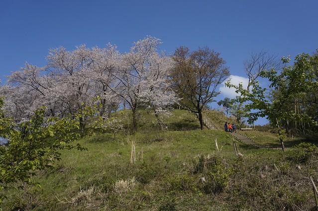高尾城址公園の桜