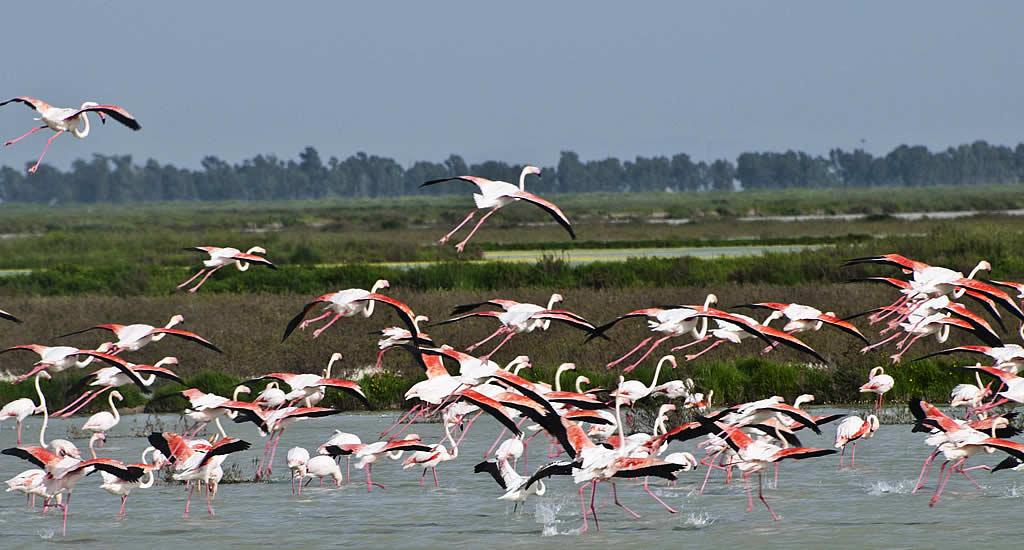 Dagtrips vanuit Sevilla: Parque Nacional de Doñana | Mooistestedentrips.nl