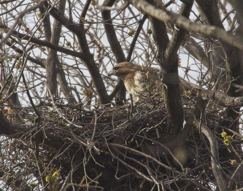 Amelia on her nest
