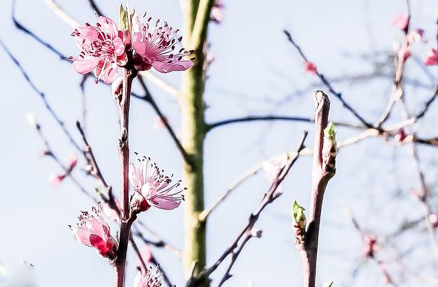 20-03-17 nah blü rosa low contrast text P1010108