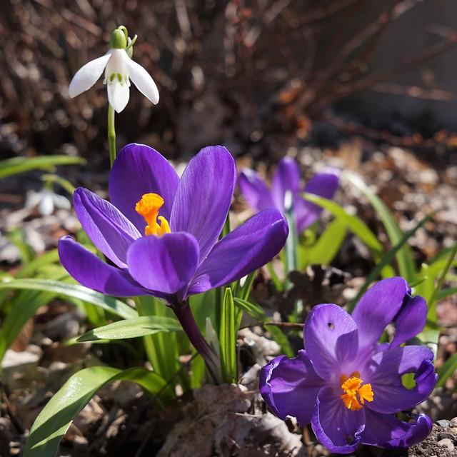 Flower love - color, shape, texture, contrast, scent