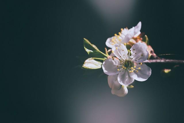Spring Saga