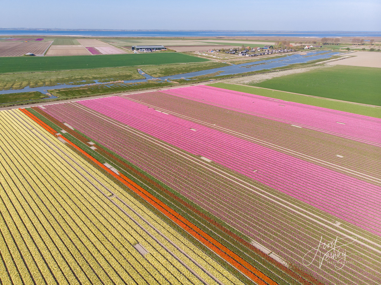 Lovely landscape with tulipfields