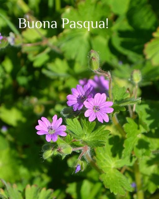 Bologna, alcuni fiori di