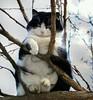 Cat fruit3