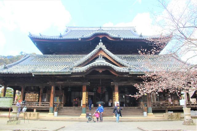 kokawadera-sakura006