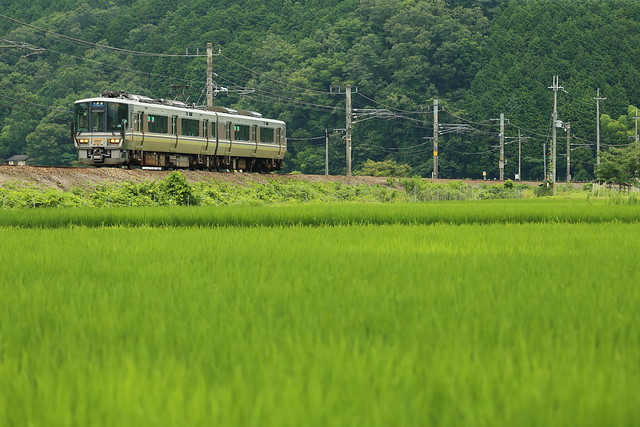 Local train and rice fields