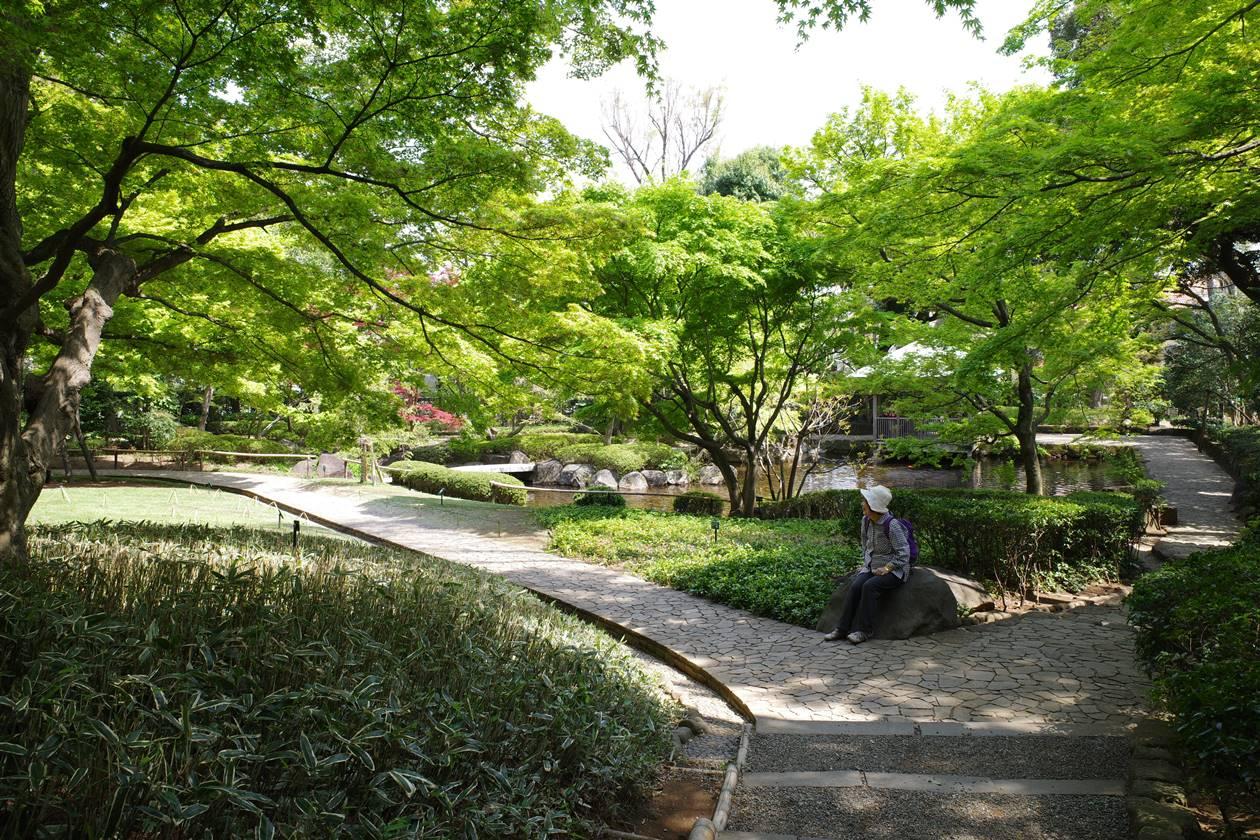 新緑の大田黒公園
