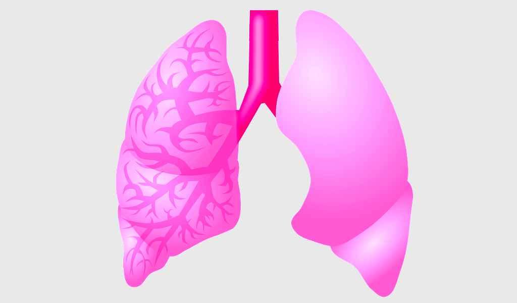 des-épithéliums-alvéolaires-comme-modèle-infection