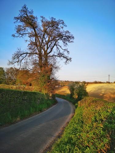 huaweimobile welwyn trees lane sunset hdr hertfordshire countryside rural village tree narrow quiet