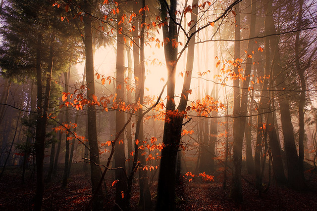 Albina sunset