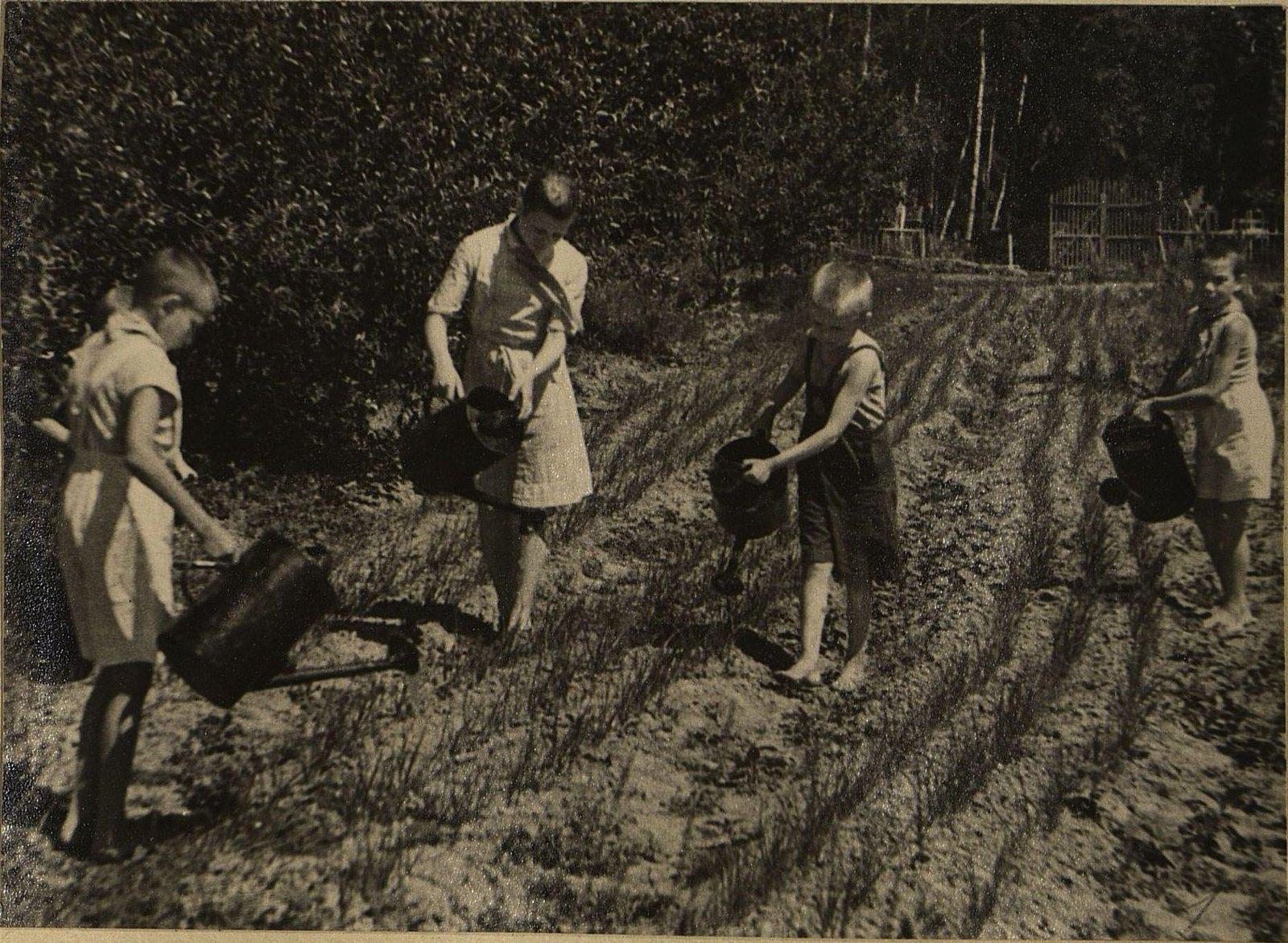 На огороде. Поливка лука-сеянца