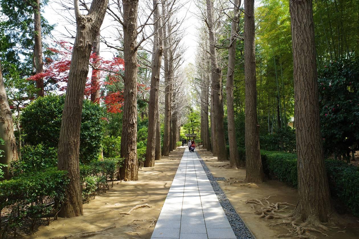 大田黒公園・イチョウ並木