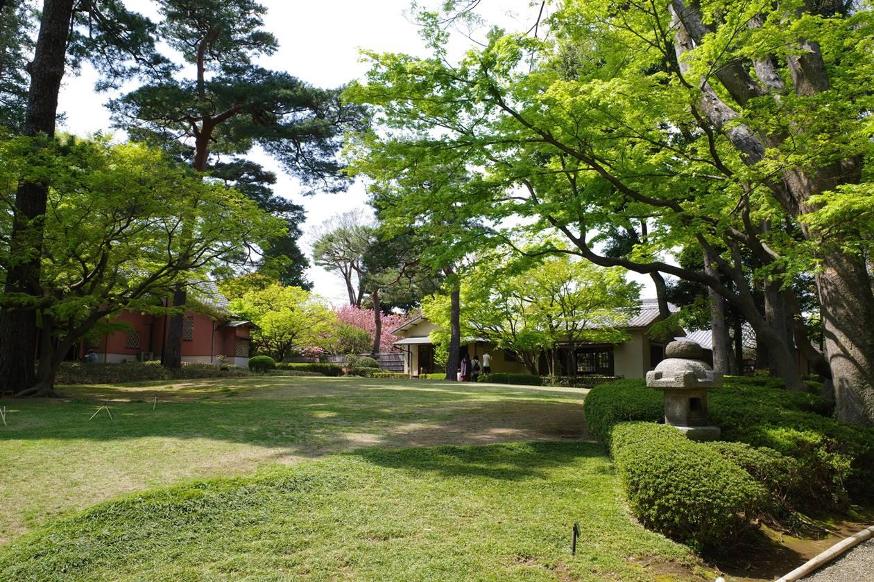 春の大田黒公園
