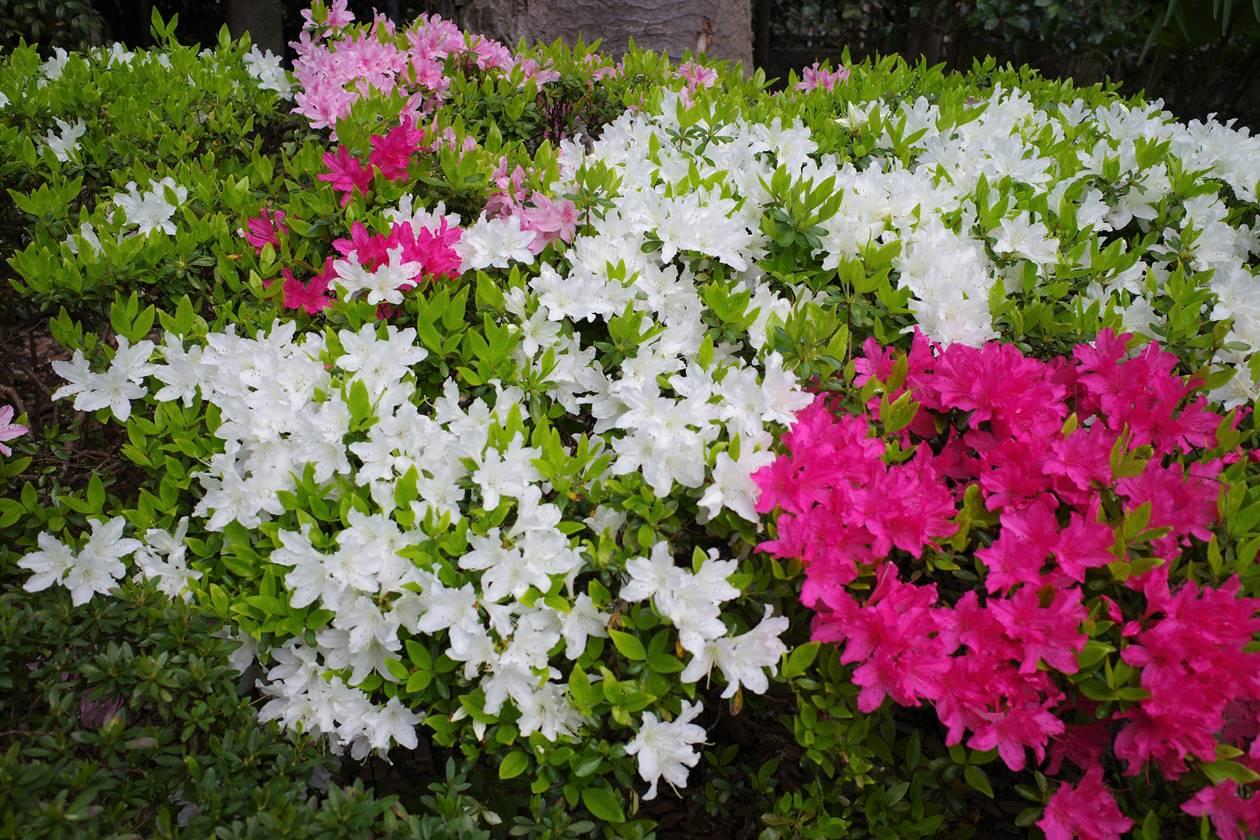 大田黒公園の花