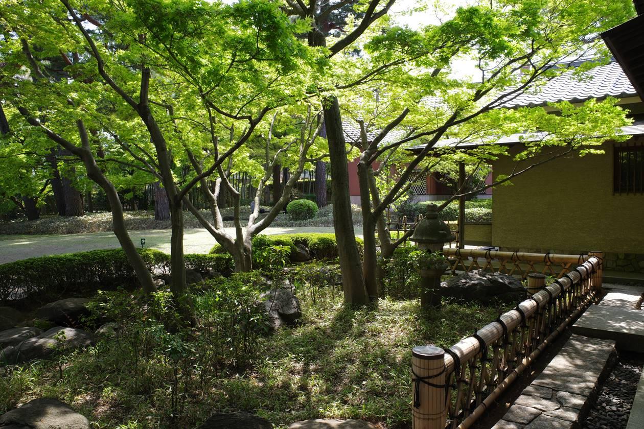 大田黒公園 新緑の日本庭園