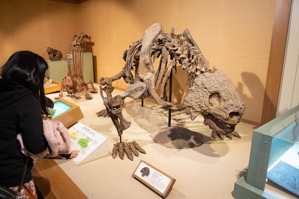 TOKAI_Univ_Dinosaur_Hall-8