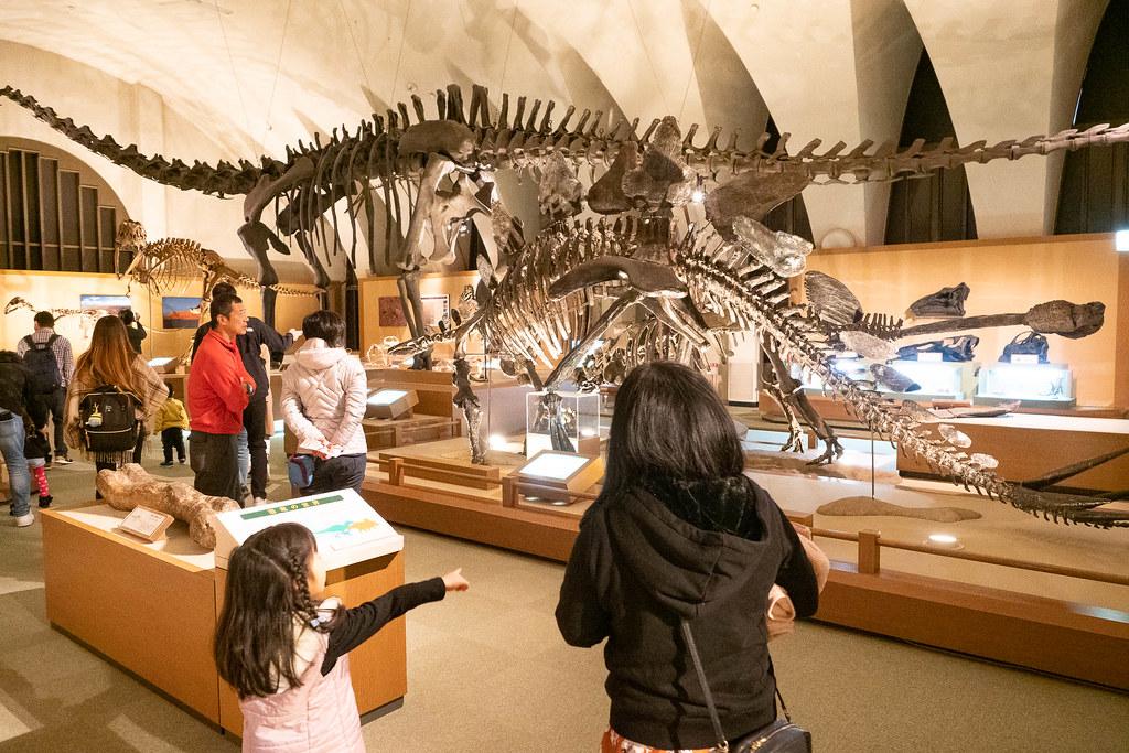TOKAI_Univ_Dinosaur_Hall-9