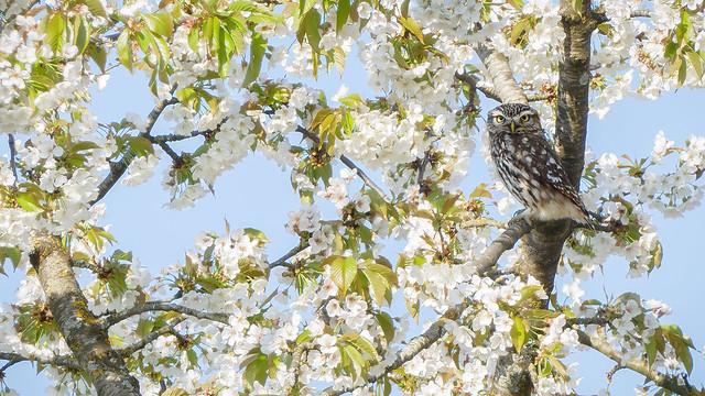 Le printemps c'est chouette !