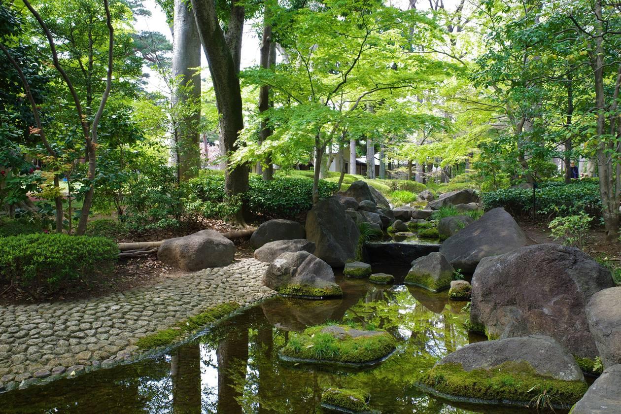大田黒公園 川と新緑
