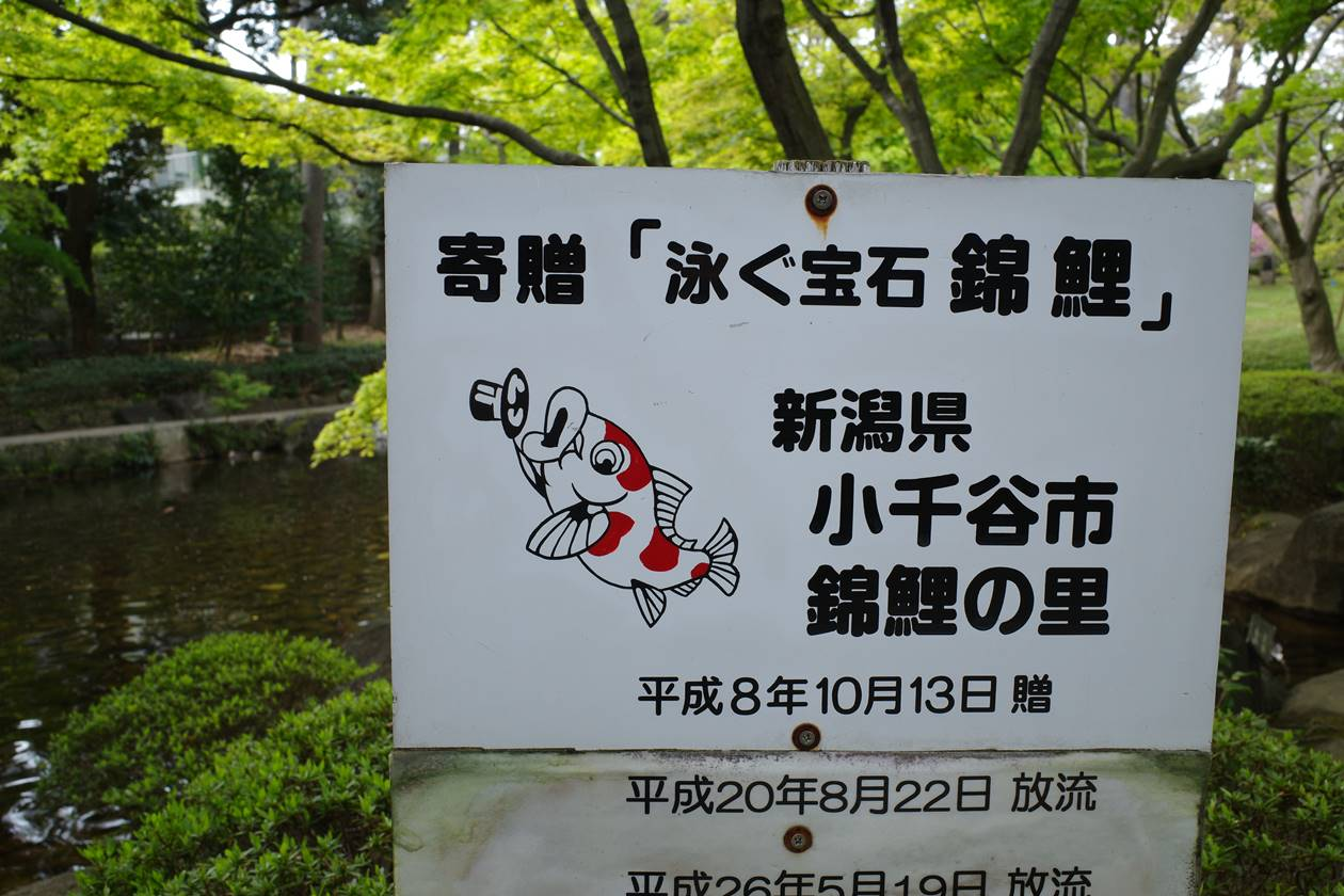 大田黒公園・錦鯉
