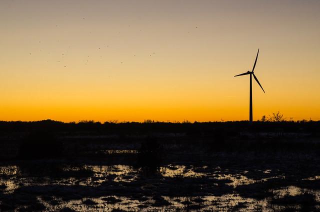 Landskap i skymningen med flygande fåglar och vindkraftverk