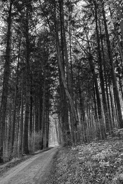Forest Track B&W I
