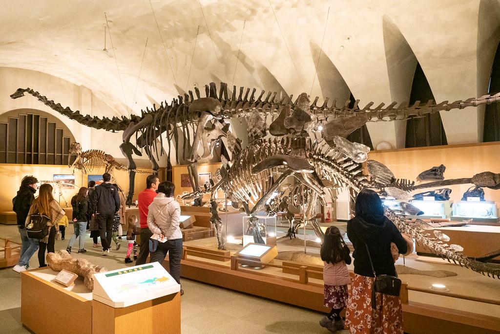 TOKAI_Univ_Dinosaur_Hall-10