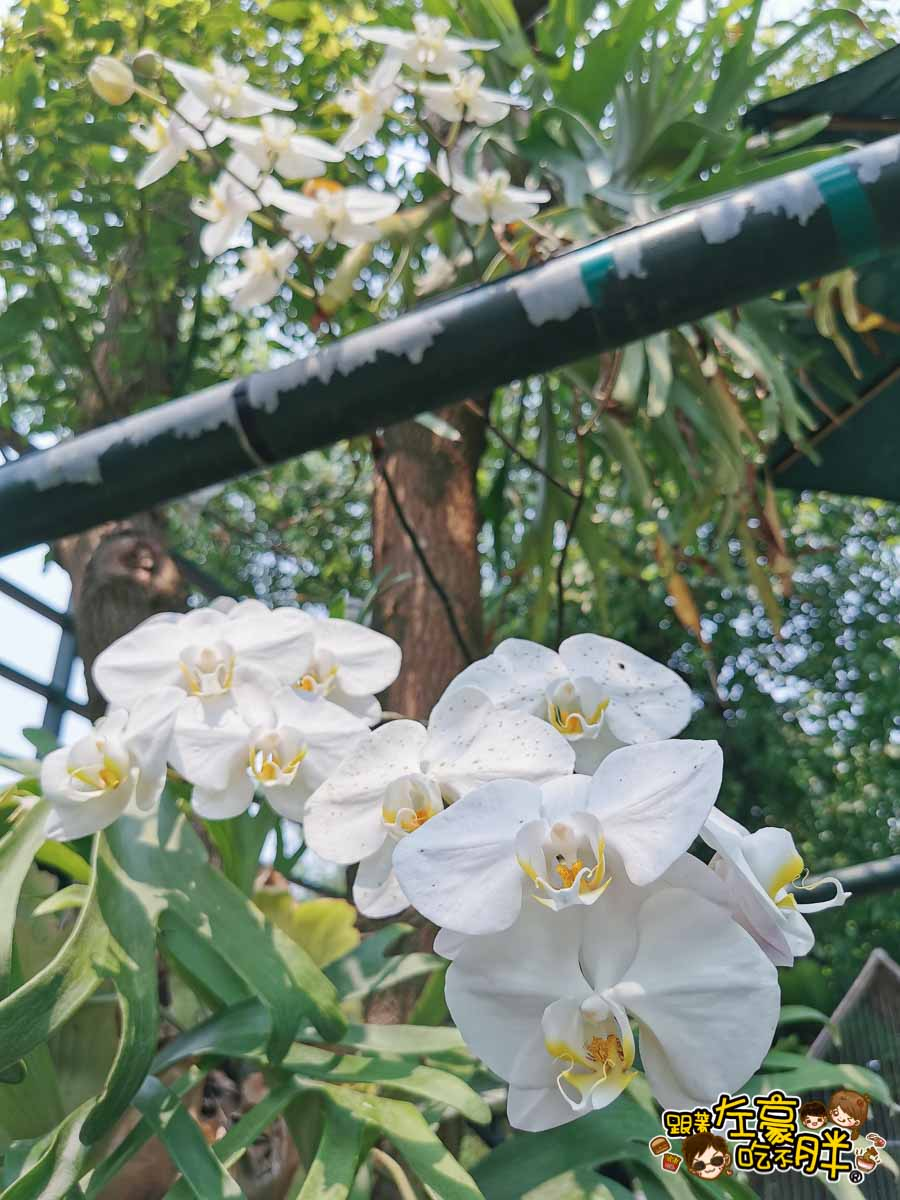 鳥松自在園 隱藏庭園餐廳-41
