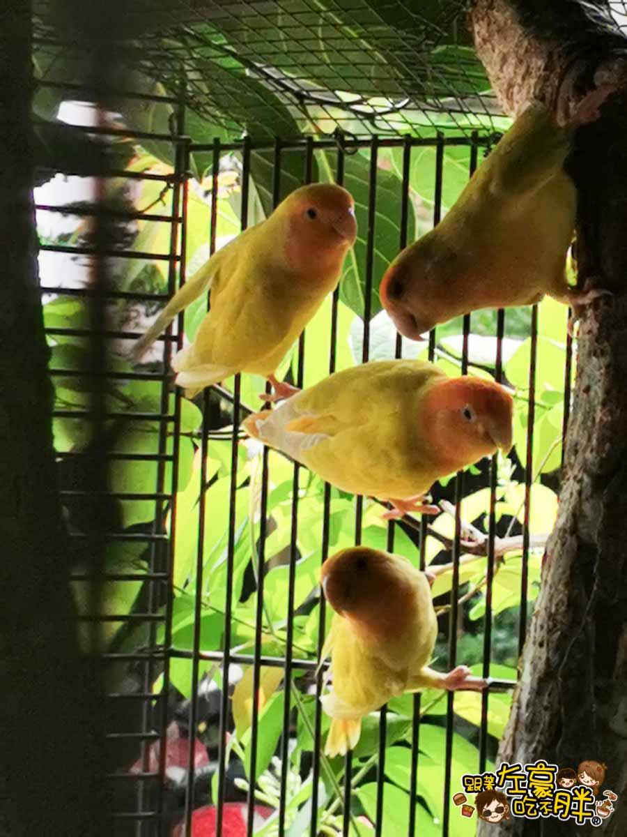 鳥松自在園 隱藏庭園餐廳-11