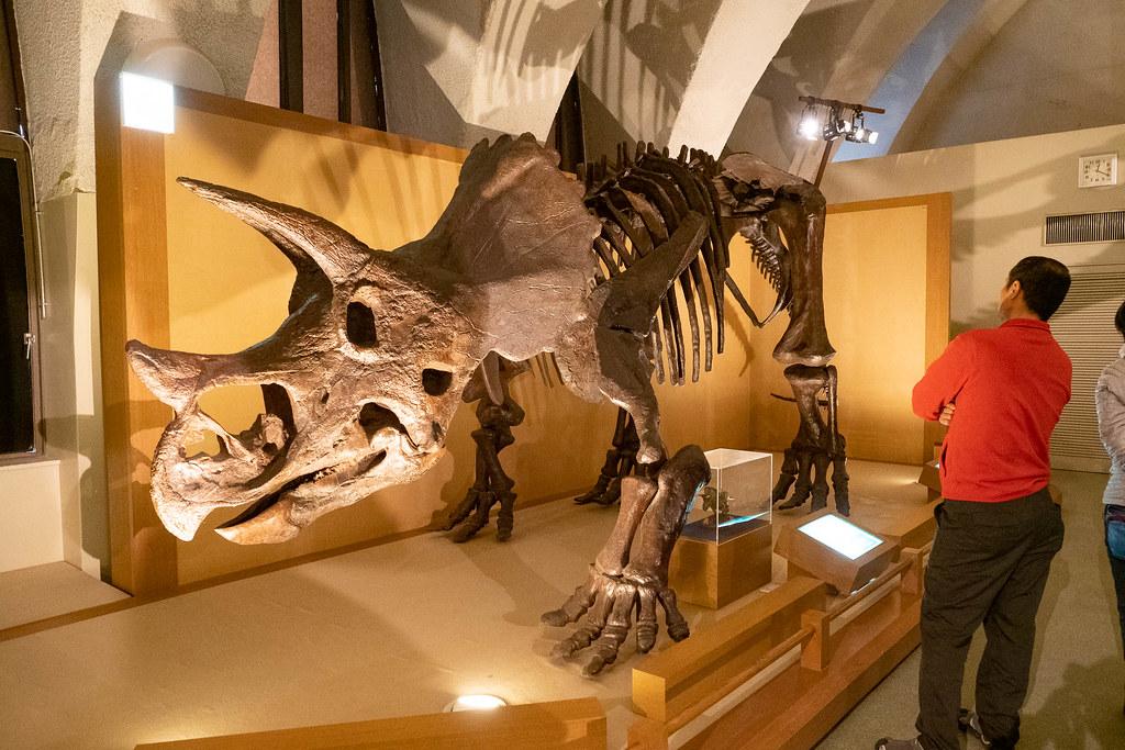 TOKAI_Univ_Dinosaur_Hall-12