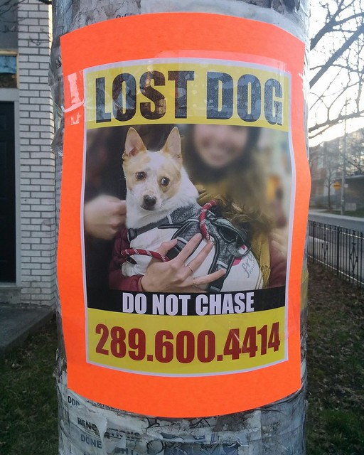 Lost dog #toronto #dovercourtvillage #bartlettavenue #dogsofinstagram #lostdog