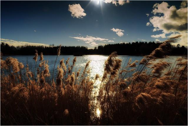 Leuchtender Teich