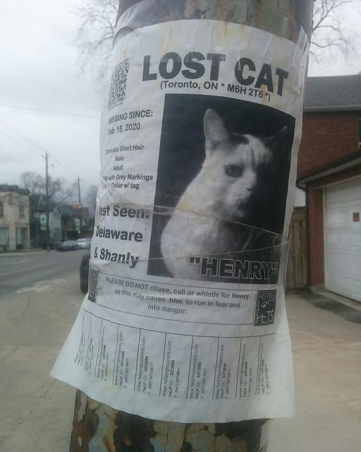 Lost cat, Henry #toronto #dovercourtvillage #dupontstreet #caturday #lostcat #latergram