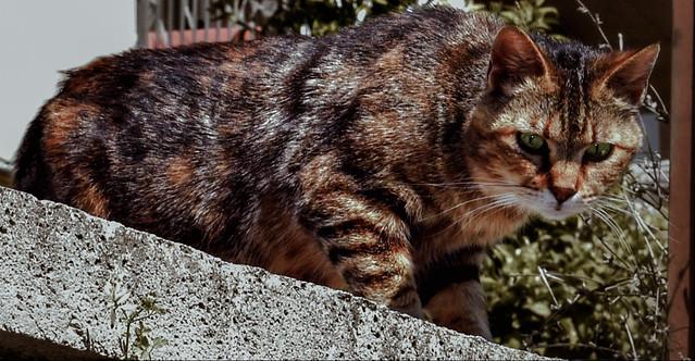 Gato Cat Roma Italia