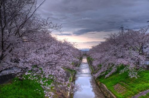 01-04-2020 Nara in early morning (1)