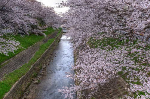 01-04-2020 Nara in early morning (11)