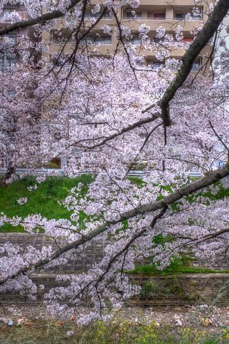 01-04-2020 Nara in early morning (6)