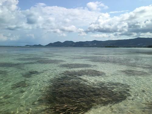 サムイ島 4月18日現在の状況 非常事態宣言24日目 島内感染者9日間ゼロ