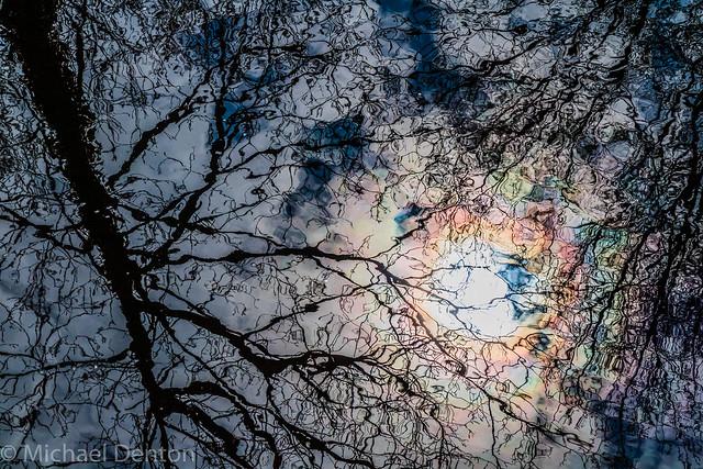 River Reflection Sun & Trees
