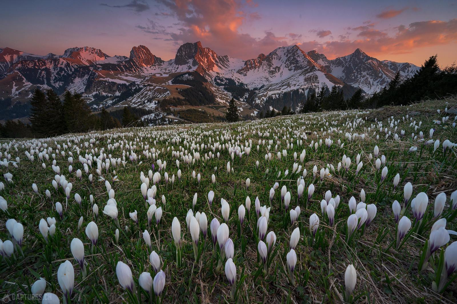 Last sun on the mountains - Gurnigel